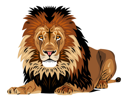 Portrait of African lion lying Illustration