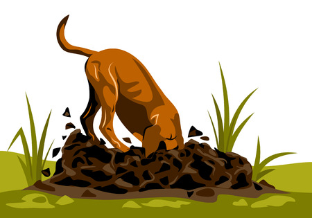 a dog who digs a hole in the ground