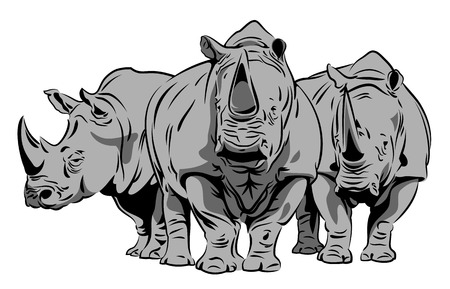 Vector image of a rhinoceros Çizim