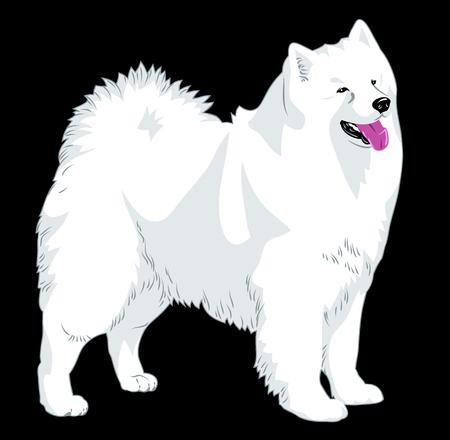 Portrait of a decorative dog pomeranian Illustration