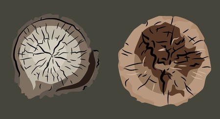 Set of images of stumps, felled trees.
