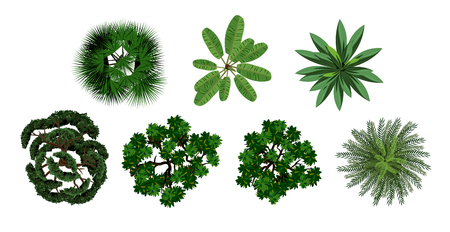 Set of crown of various trees with lush foliage.