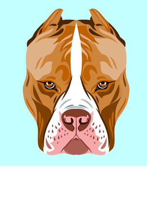 Portrait of a dog breed pit bull terrier Vector illustration. 스톡 콘텐츠 - 99658408