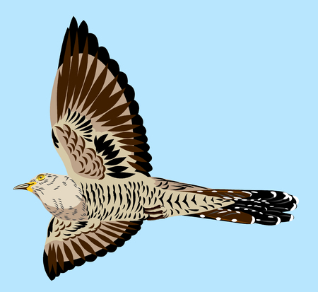 Portrait of a flying cuckoo