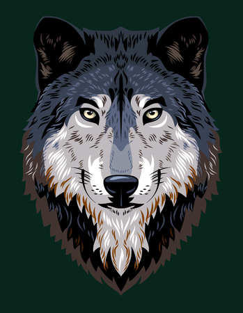 Beautiful portrait of a forest wolf Illustration