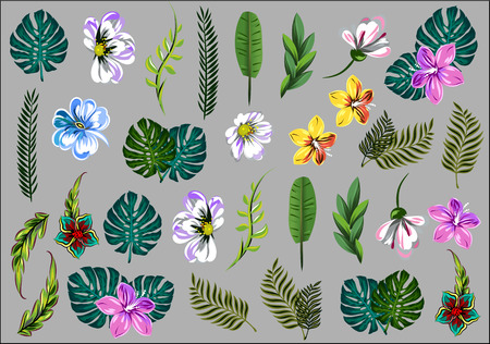 Collection, a set of tropical flowers and leaves Illustration