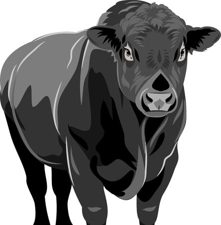 portrait of a bull Illustration