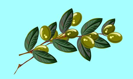 Branch with olives, freehand drawing