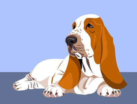 Funny and cute portrait of a dog Basset Hound