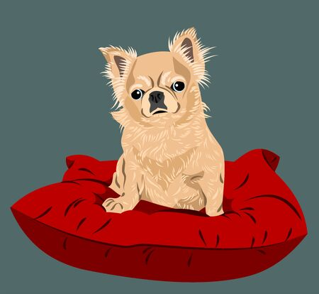 Funny and cute chihuahua dog portrait