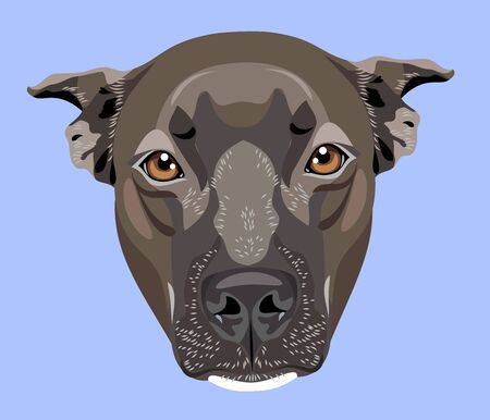 cute portrait of a dog pit bull terrier (american bulldog) 写真素材 - 130800592