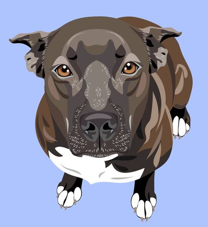 cute portrait of a dog pit bull terrier (american bulldog) Ilustración de vector
