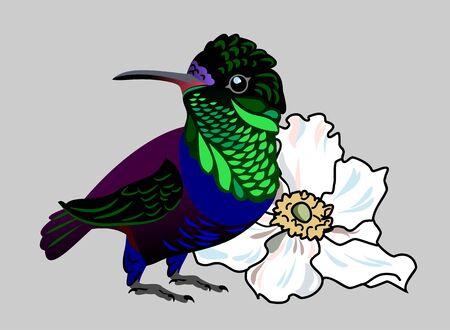 The image of an exotic bird hummingbird Illusztráció