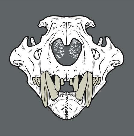 Skull of a lion