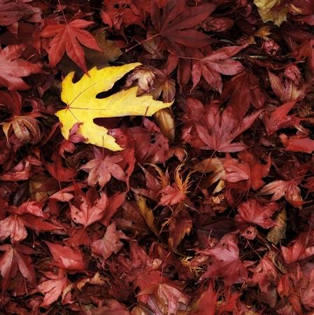 Autumn leaves Standard-Bild - 14594214