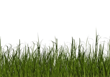Leaves of Grass photo
