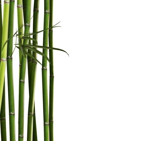 Bambus Standard-Bild - 14594197