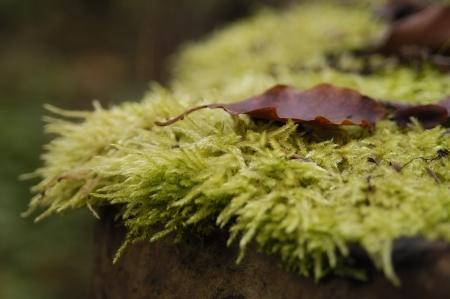 Moss Standard-Bild