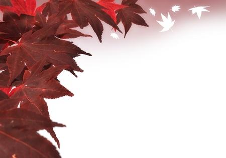 3D rendering of red maple leaves Standard-Bild