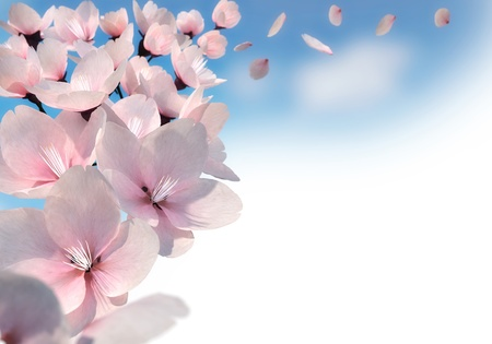 3D rendering of pink cherry blossoms photo