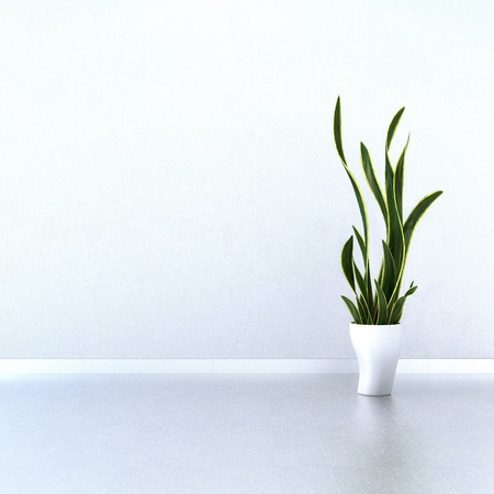 Green Plant on a white floor with a white wall Standard-Bild