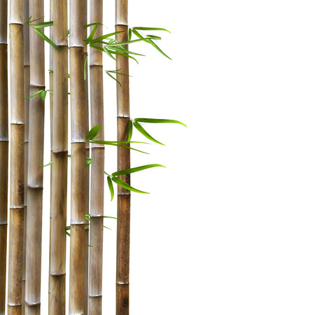 caulis: Brown Bamboo With Green Leafs on a White Background