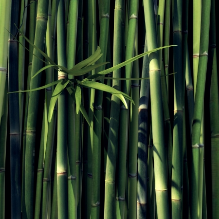 Green Bamboo with leaves and black Background Standard-Bild