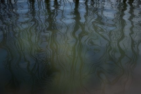 Shadows of trees on water surface Standard-Bild