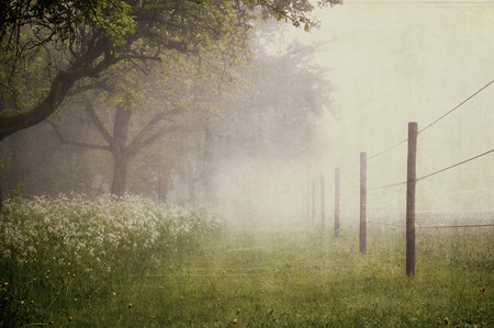 Paddok with early morning fog - Vintage look Standard-Bild