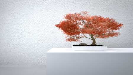 inddor: Red Bonsai in front of a white wall Stock Photo