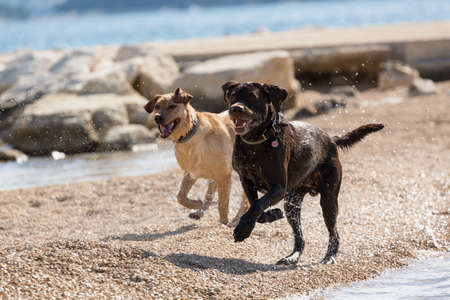 romp: two dogs romp on the beach Stock Photo