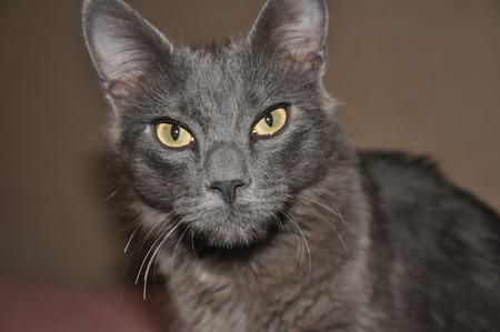catastrophe: Grey Cat
