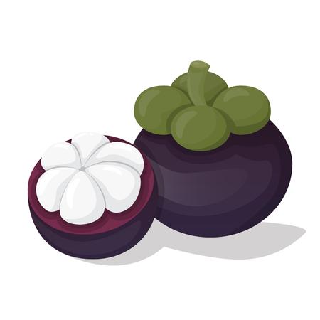 mangosteen: Mangosteen fruit vector