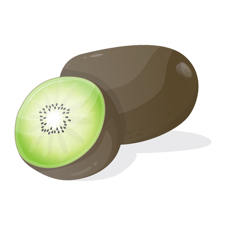 kiwi fruit: kiwi fruit vector