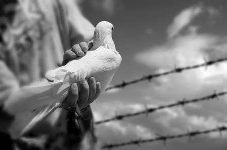 boy holding white dove Stock Photo