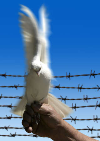 man holding white dove photo