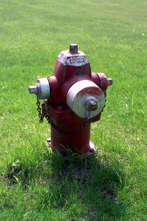 extinguish: close up shot of extinguish on green grass