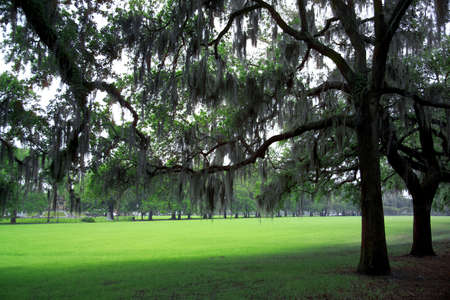 underbrush: detail shot from a park in Savannah, GA Stock Photo