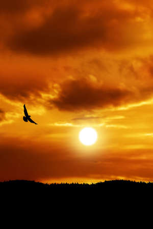 bird silhouetted by sunset flying over cloudy background Stock Photo - 3652233