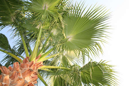 an image of palm tree and blue sky Stock Photo - 3951213