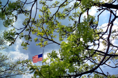 green tree and American flag in spring Stock Photo - 3951011