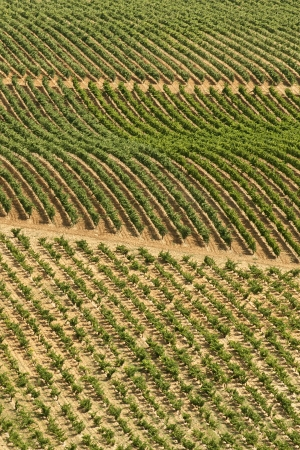 Vineyards in La Rioja, Spain photo
