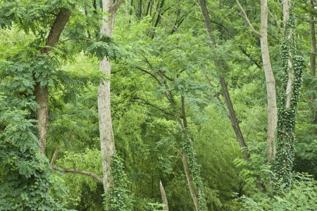 View of a forest with lots of green trees and plants Standard-Bild