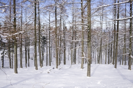 View of a wood in a sunny winter day after a snowfall Standard-Bild