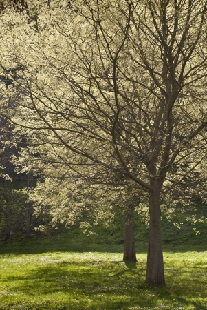 View of some trees in the beginning of spring