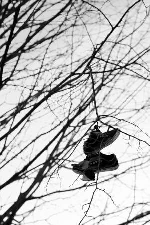 A pair of old shoes hung from a tree Standard-Bild