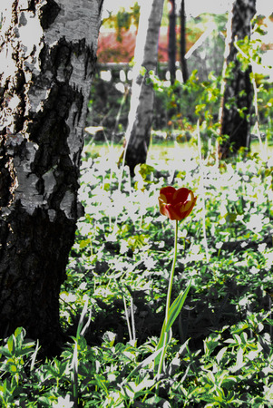 A red flower blooming in spring