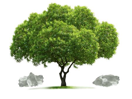 Geïsoleerde boom en witte stenen op witte background.clipping-weg. Stockfoto - 84272897