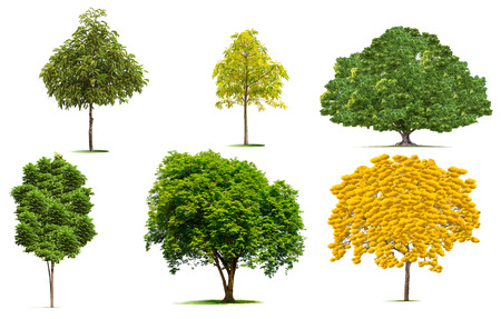 Beautiful  green trees collection on white background.Beautiful yellow flowering trees..clipping path.