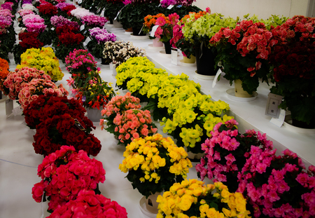 Flowers on display at a flower show in Tokyo, Japan. Stock Photo